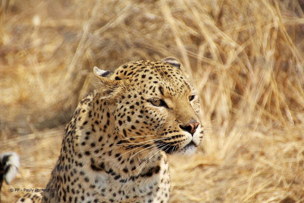 2012/08 - Afrika - Namibia