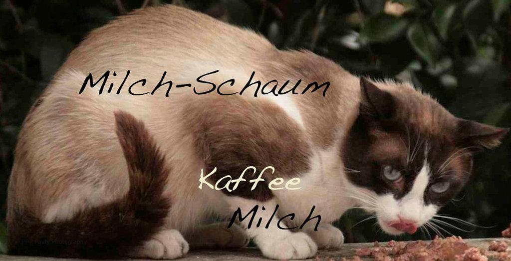 Latte Macchiato Katze